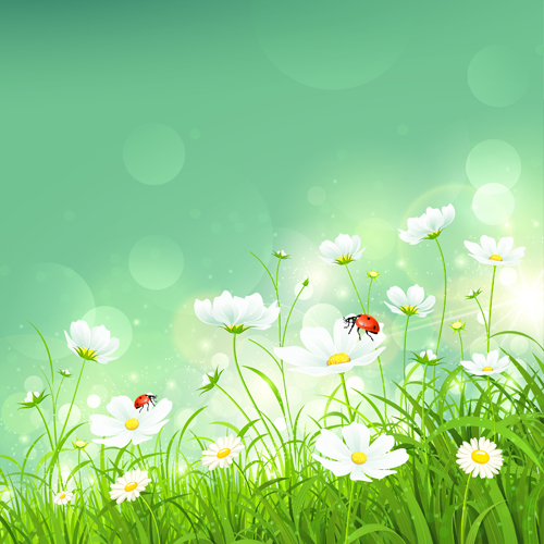 coccinella and white flower shiny background vector  vector, Beautiful flower