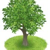 Creative green tree design vector graphics 01