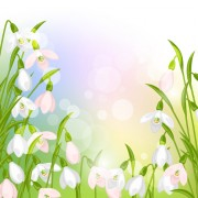 Link toSnowdrops flowers with shiny background vector