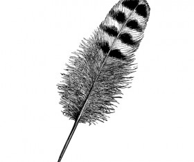 Realistic feather illustration design vector 01
