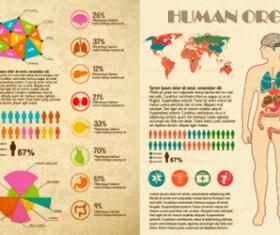 Vintage human organ infographics vector