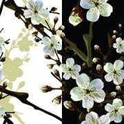 Link toBeautiful cherry drawn elements vector