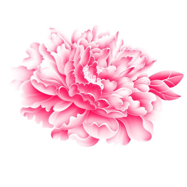 Free Ppt Backgrounds Desktop Wallpaper Flower Pink Lotus: Realistic Pink Flower Psd Graphics Free Download