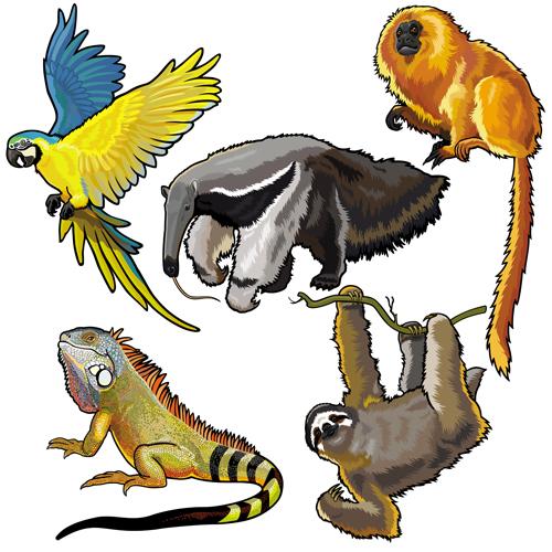 Vector set of wild animals design graphic 03