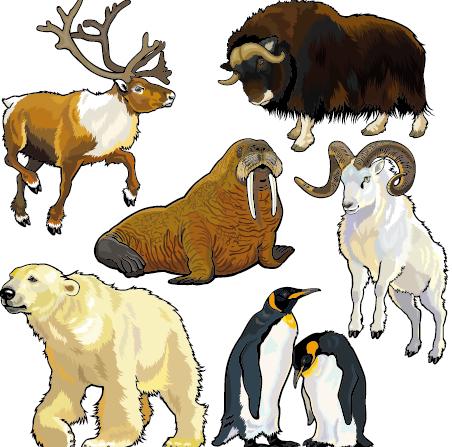 Vector set of wild animals design graphic 07