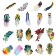 Beautiful feather psd graphics