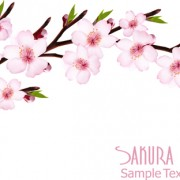 Link toBeautiful sakura vector background graphics 01