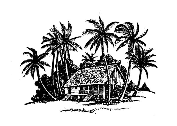 Nature Hand Drawing Hand Drawing Coconut Tree And