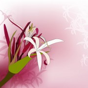 Link toHuge collection of beautiful flower vector graphics 18