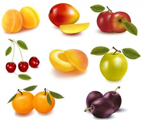 Realistic fruits icons vector material 02