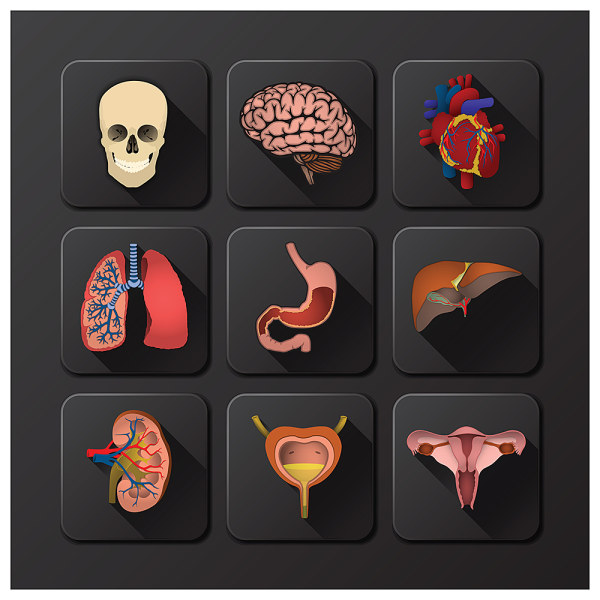3d Icons Internal Organs Vector People Icons Vector