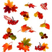 Link toAutumn leaves with fruit vector material 01