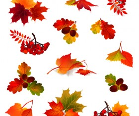 Autumn leaves with fruit vector material 01