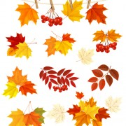 Link toAutumn leaves with fruit vector material 02