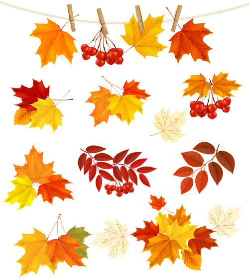 Autumn leaves with fruit vector material 02