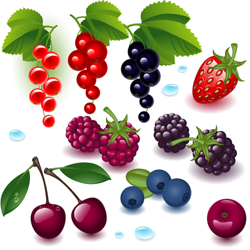 Realistic fruits and berry design vector 01