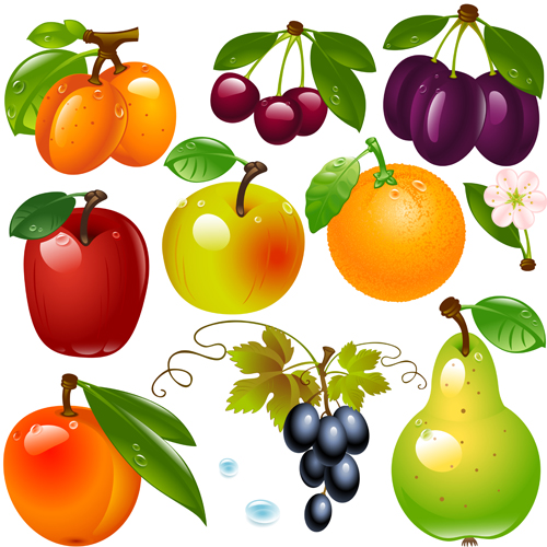 Realistic fruits and berry design vector 04