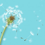 Link toShiny dandelion vector backgrounds material 01