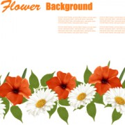 Link toSummer white and orange flowers background vector 01