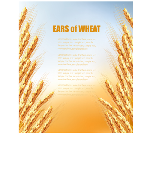 Golden Wheat Vector Background Graphics Over Millions