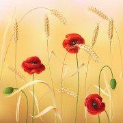Link toPoppy with wheat design vector background 01