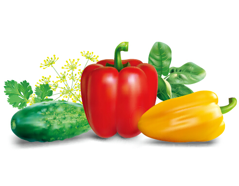Realistic peppers and cucumbers vector