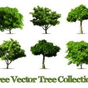 Link toRealistic tree vector design graphics