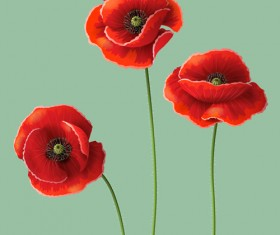 Red poppy design vector graphics