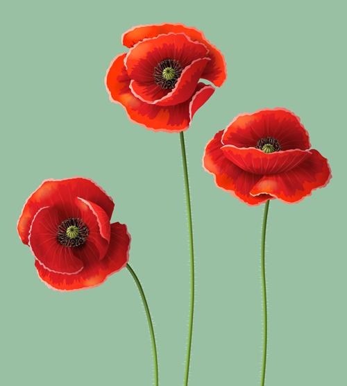 Poppydesign