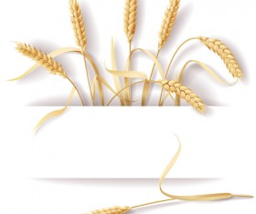 Wheat and white background vector material