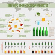 Beer infographic business template vector 04