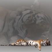 Link toGeometric shapes wild animals creative vector set 05