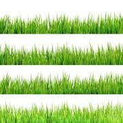 Link toRealistic grass borders design vector 01