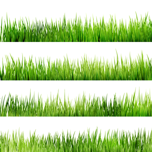 Realistic grass borders design vector 03 over millions for Best grasses for borders