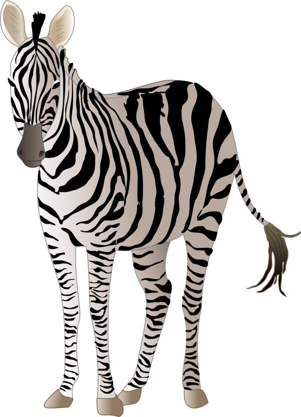 Realistic Zebra Vector Free Material