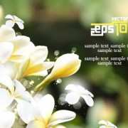 Link toWhite flowers with blurred background vector