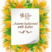 Link toBeautiful autumn leaves with paper background 01