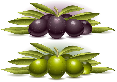 Delicate olives vector design material 05