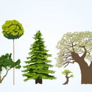 Link toDifferent tree vectors material