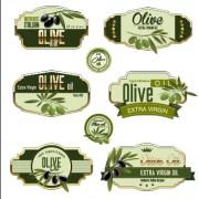 Link toGreen olive oil labels set vector 03