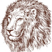 Link toHand drawing lion vector material 01