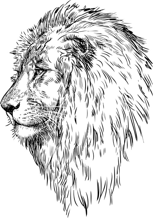 how to draw a realistic lion head