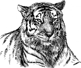Hand drawing tiger vector material 01