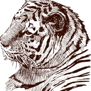 Link toHand drawing tiger vector material 02