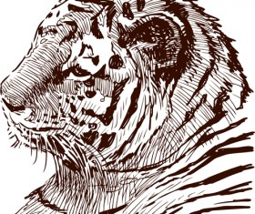 Hand drawing tiger vector material 02