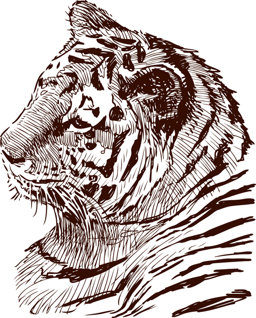 Hand drawing tiger vector material 02