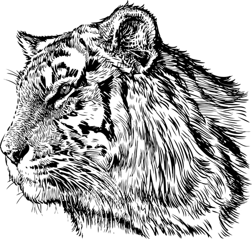 Hand drawing tiger vector material 03
