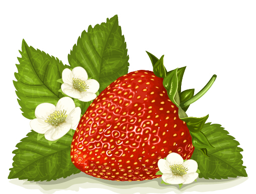 Strawberry with white flower vector