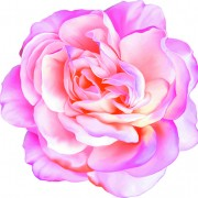 Link toBeautiful flower set vector material 04