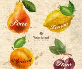 Drawn watercolor fruits vector design set 01